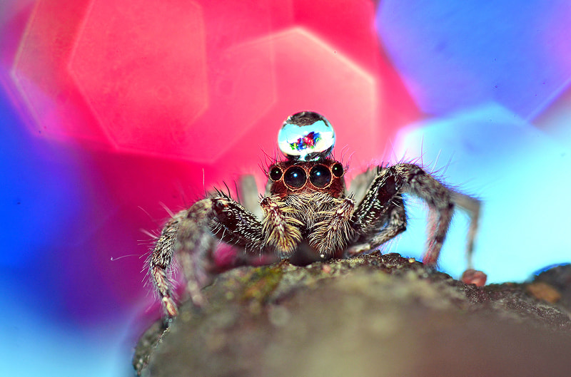 Photograph **...SPIDER...** by Bu Balus on 500px
