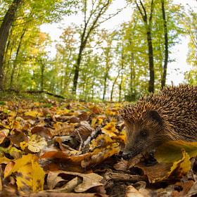 Hedgehogs home by Alexander Ahrenhold on 500px.com