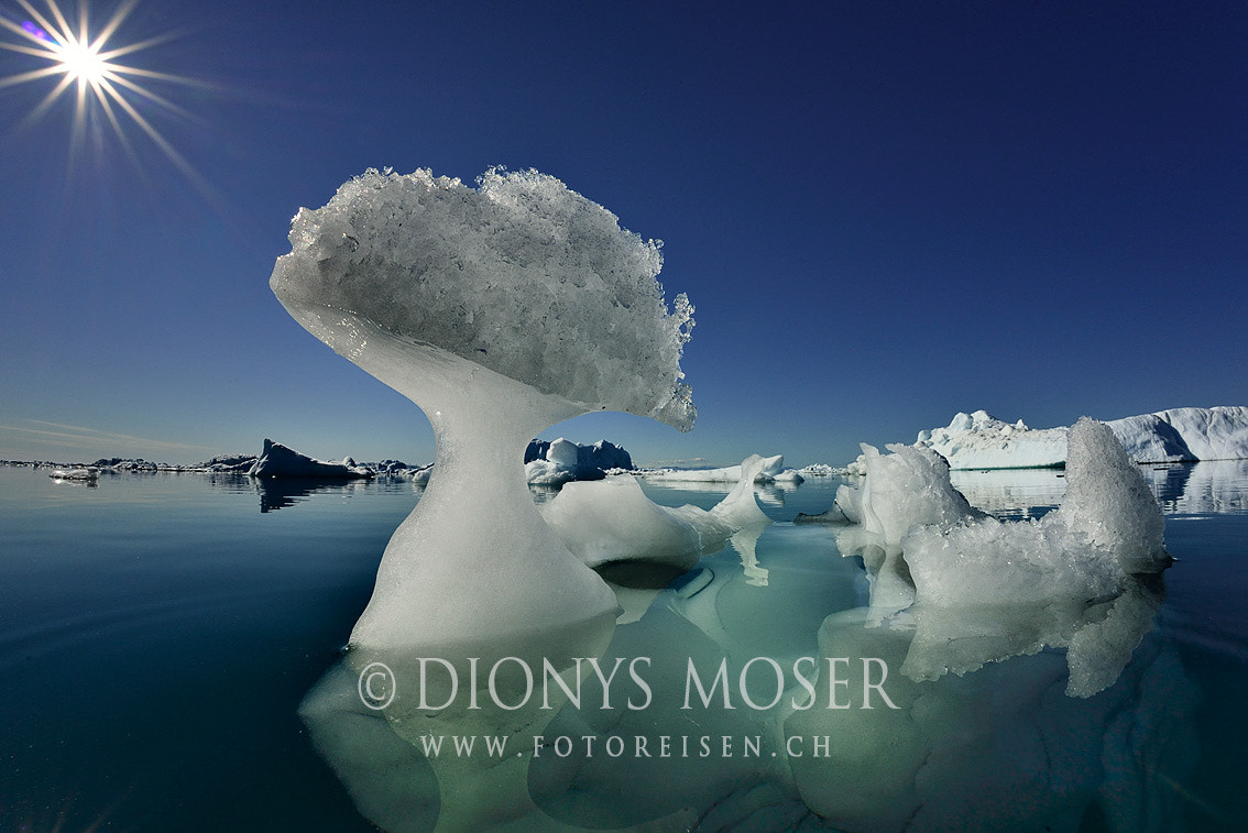 Photograph Arctic mushroom by Dionys Moser on 500px