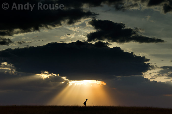 Photograph A light from Heaven by Andy Rouse on 500px