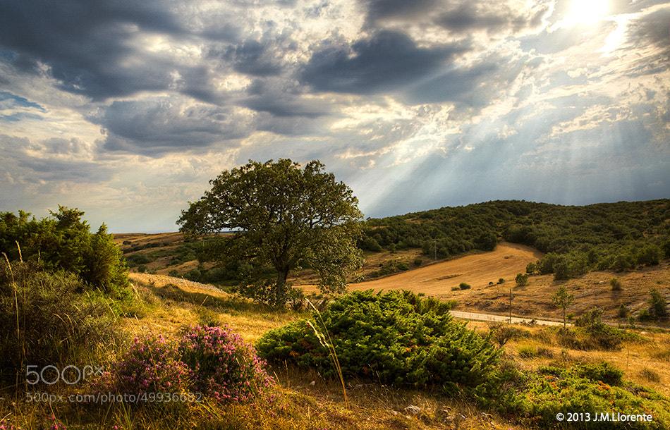 Photograph Castilla in Summer by J.M. Llorente on 500px