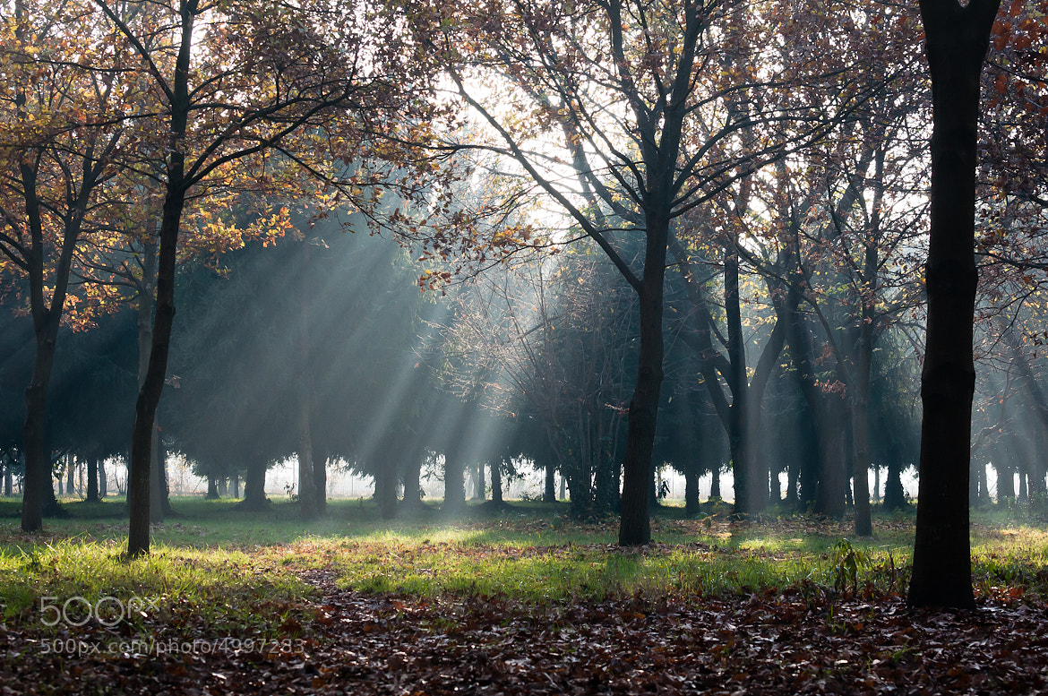 Photograph Light through the leaves by Nicholas Marmonti on 500px