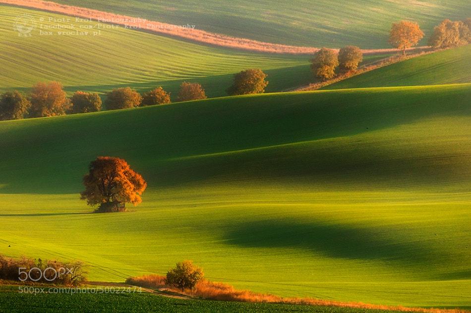 Photograph Autumn by Piotr Krol on 500px