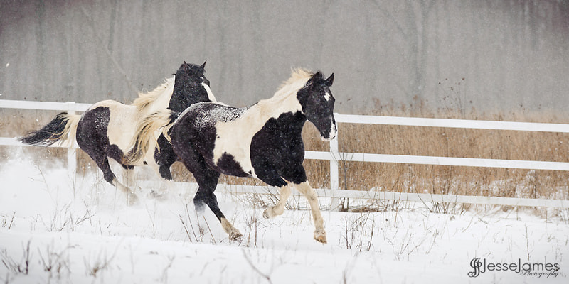 Photograph Horses Running in The Snow by Jesse James Photography on 500px
