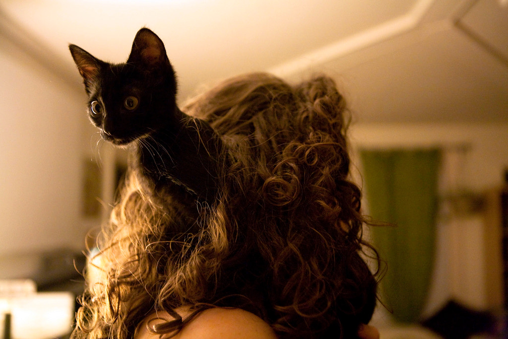 Photograph Cat hair by Dan Nguyen on 500px