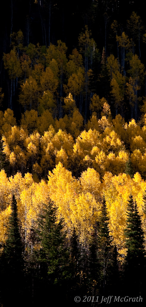 Photograph Golden Band by Jeff McGrath on 500px