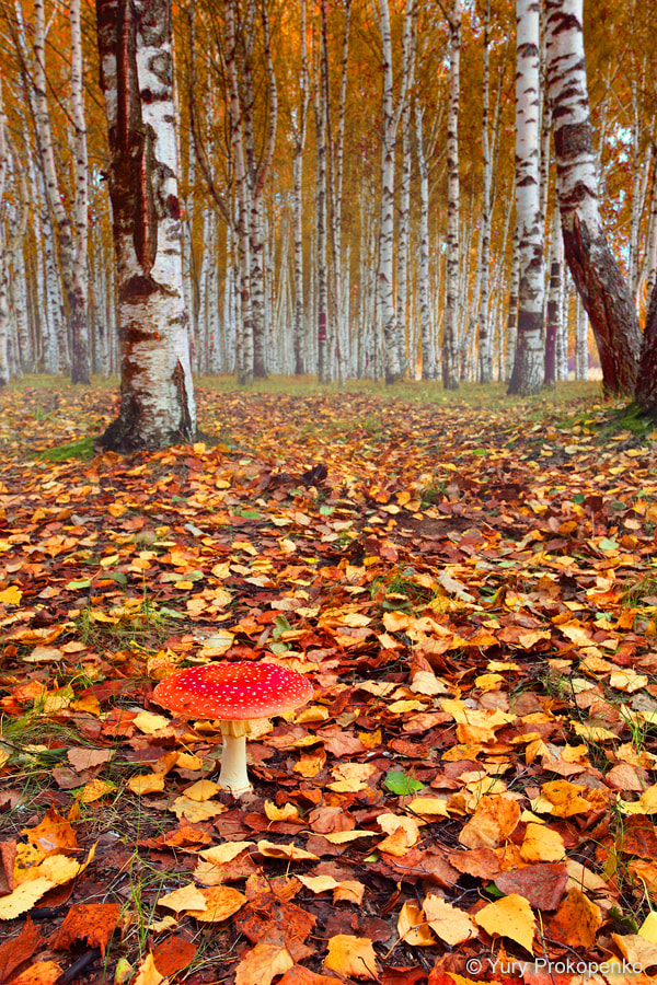 Photograph Autumn Forest by Yury Prokopenko on 500px