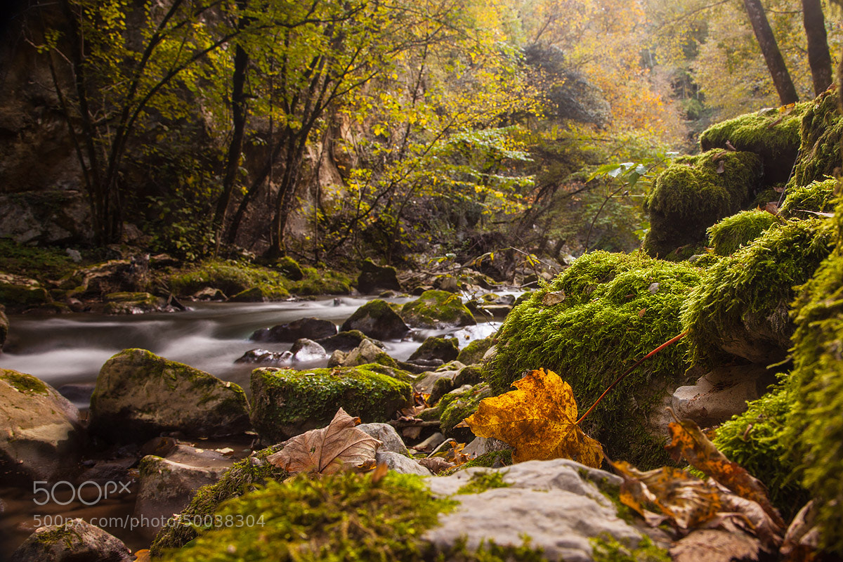 Photograph autumn by Antonio Torkio on 500px