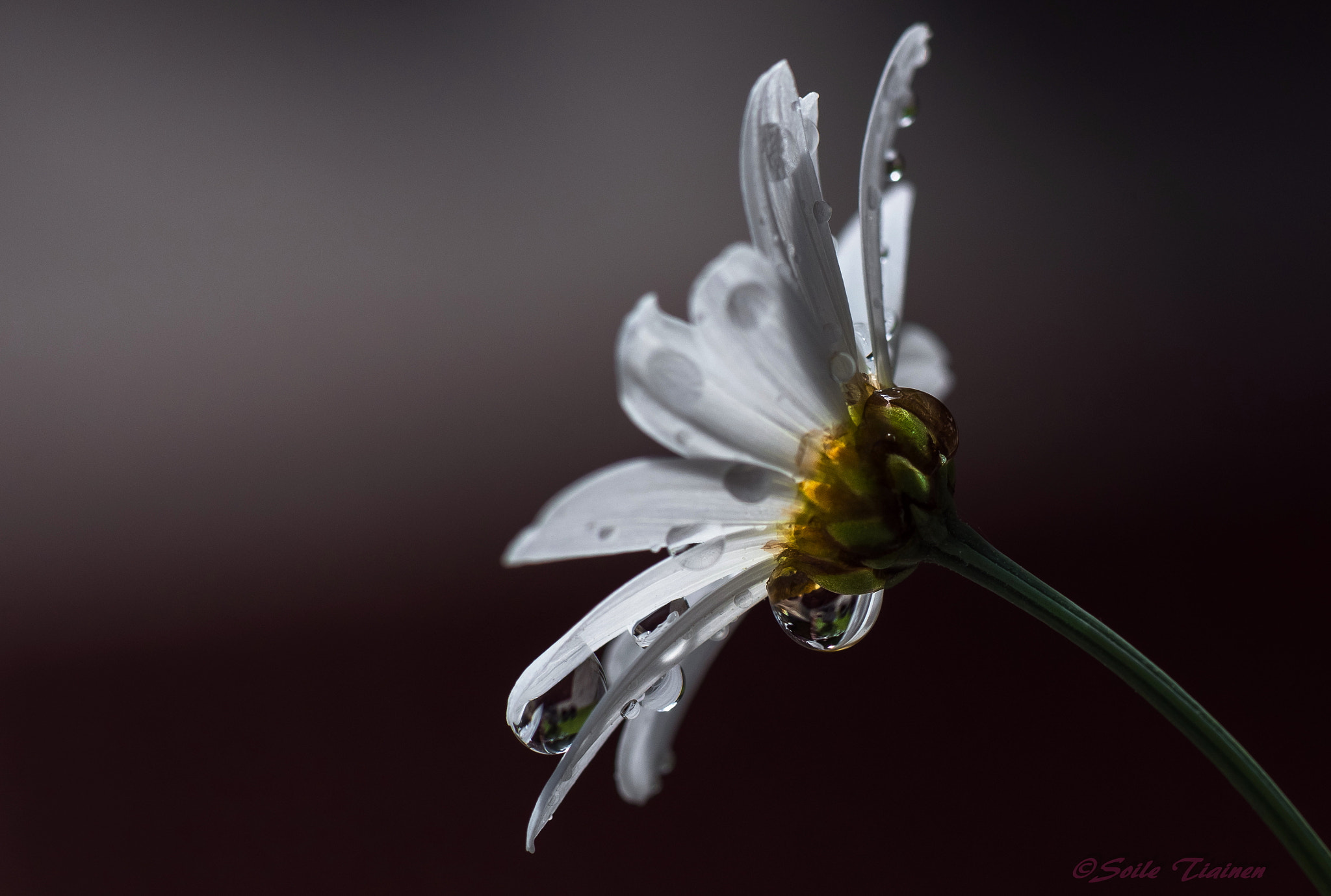Photograph The Droplets by Sole Tiainen on 500px