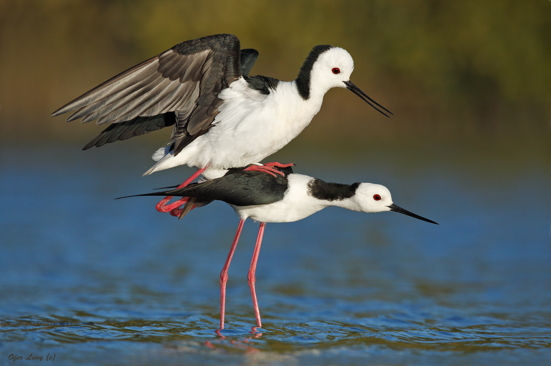 Photograph Love on stilts by Ofer Levy on 500px