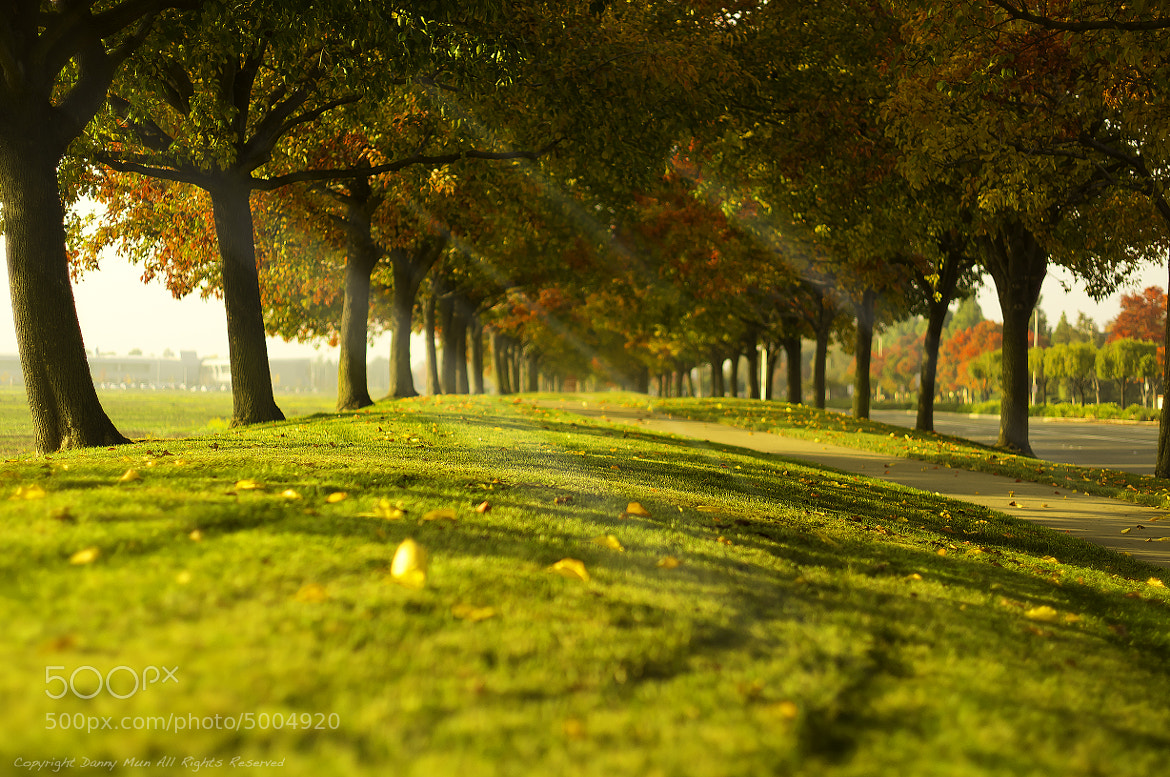 Photograph autumn 2011 by Danny mun on 500px