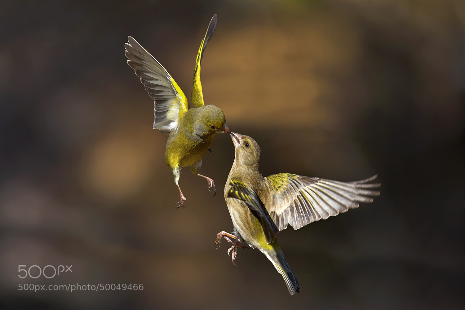 Photograph Flying Kiss 9 by Marco Redaelli on 500px
