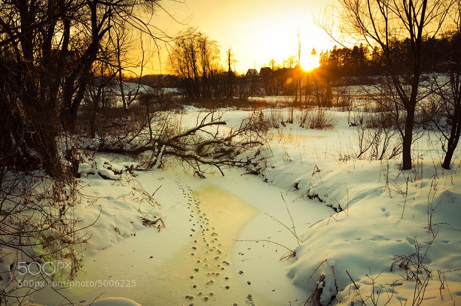 Photograph Sunset in Borodino by Nikolay Denisov on 500px