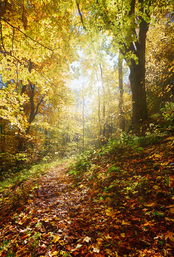 Photograph Fallen Leaves by Michael  Breitung on 500px