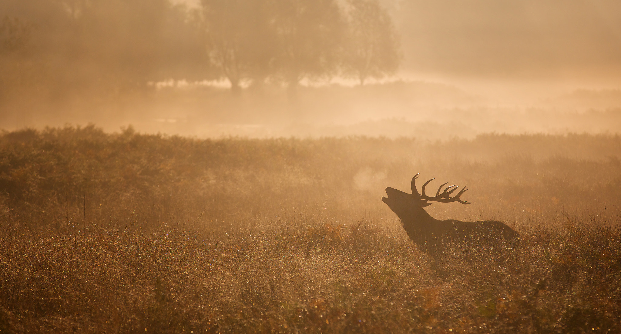 Photograph Richmond Red by Mark Bridger on 500px