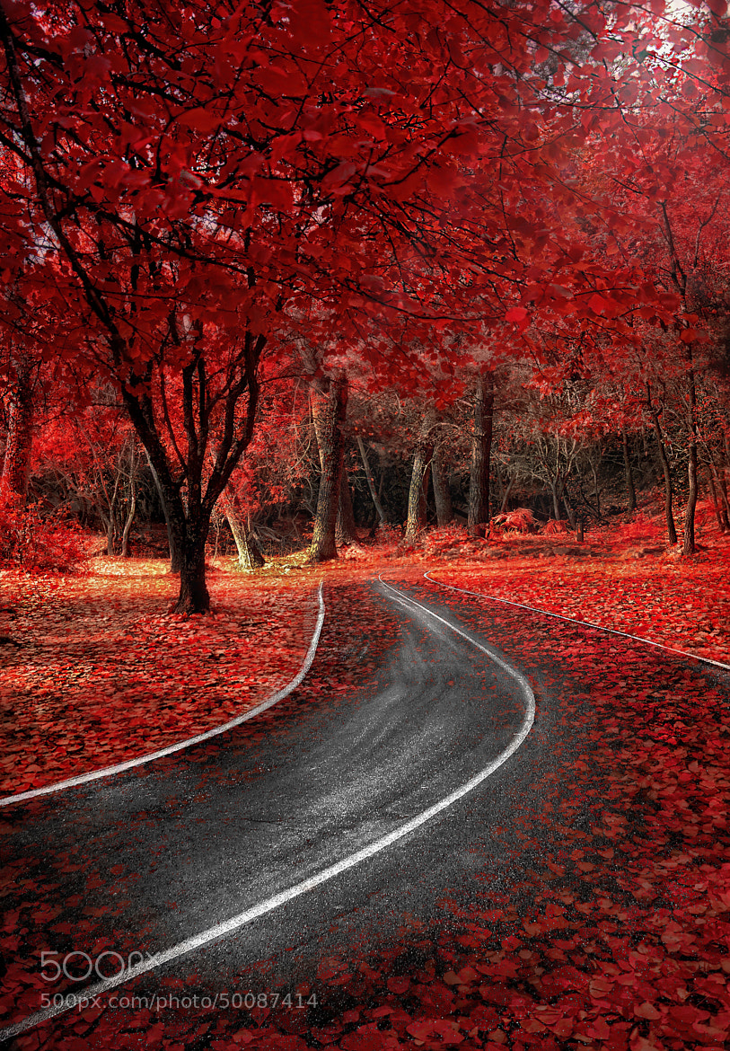 Photograph Red Autumn by Alfon No on 500px