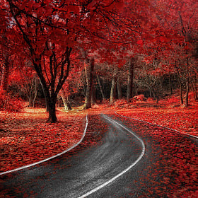 Red Autumn by Alfon No on 500px.com
