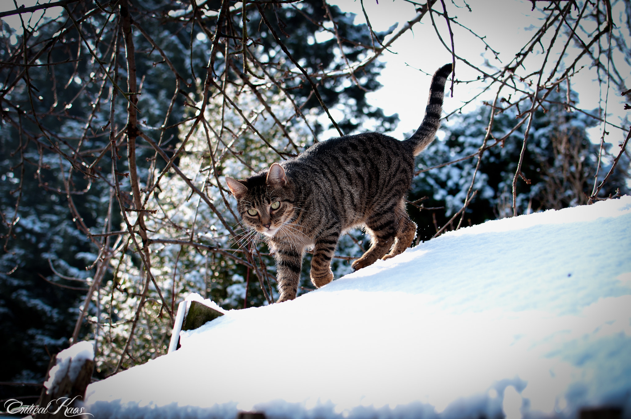 Photograph Alfie playing in snow by Daren Grant on 500px