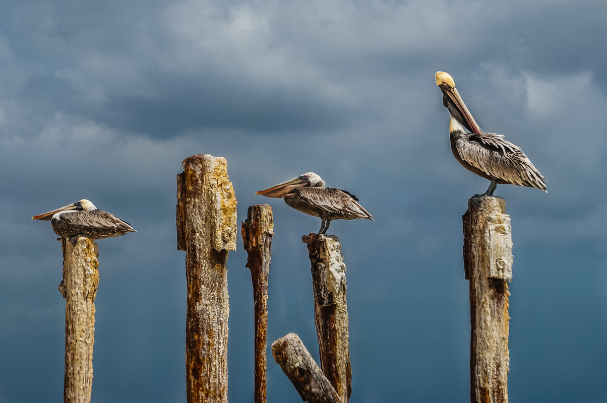 Photograph Pelican Place by Chilehead Craig on 500px
