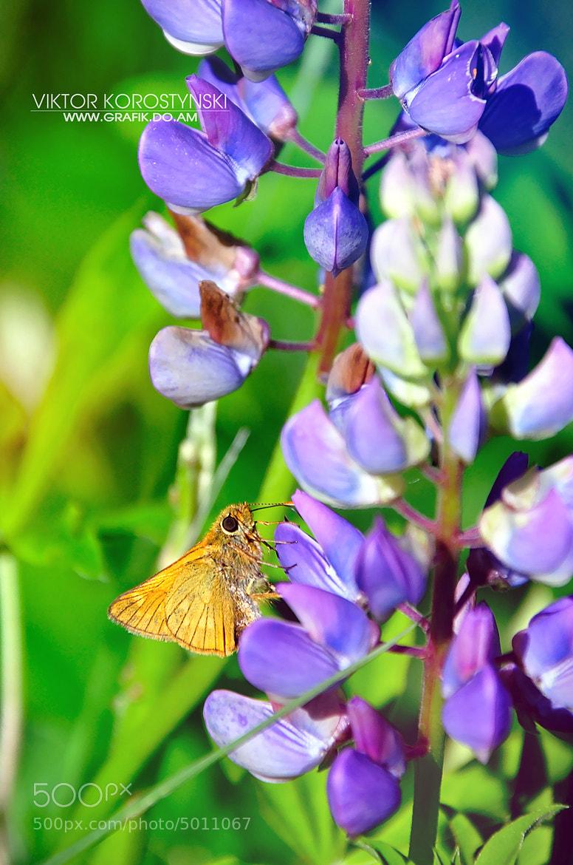 Photograph Little butterfly by Viktor Korostynski on 500px