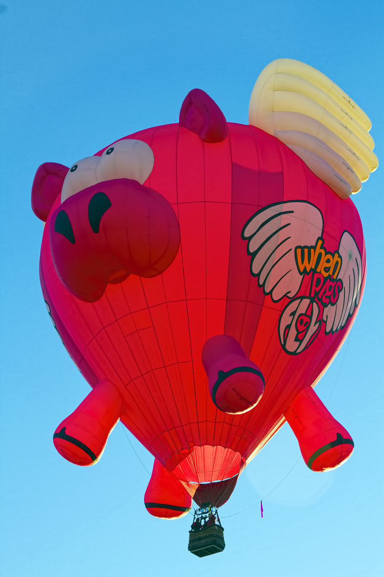 Photograph When Pigs Fly by Gary Holmes on 500px