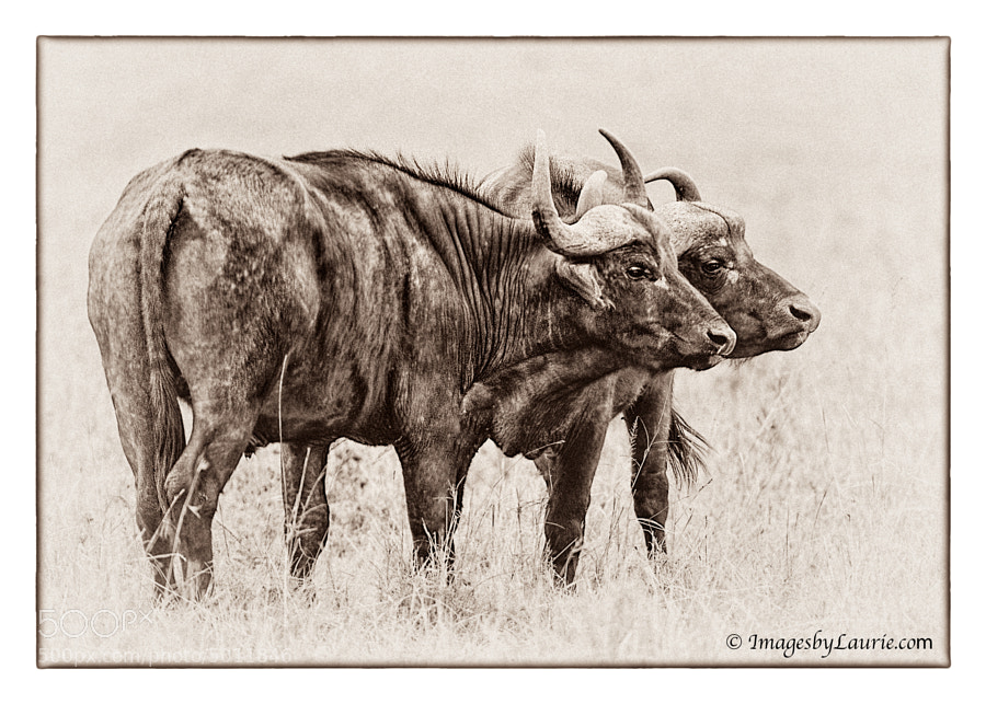 A study in Black and White