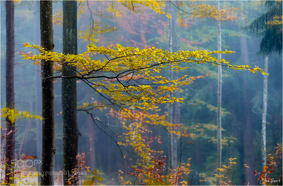 Photograph Autumn Abstraction by Jan Geerk on 500px