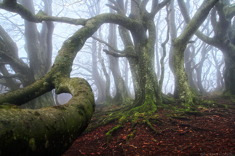 Photograph Caught by an Ent by Florent Courty on 500px