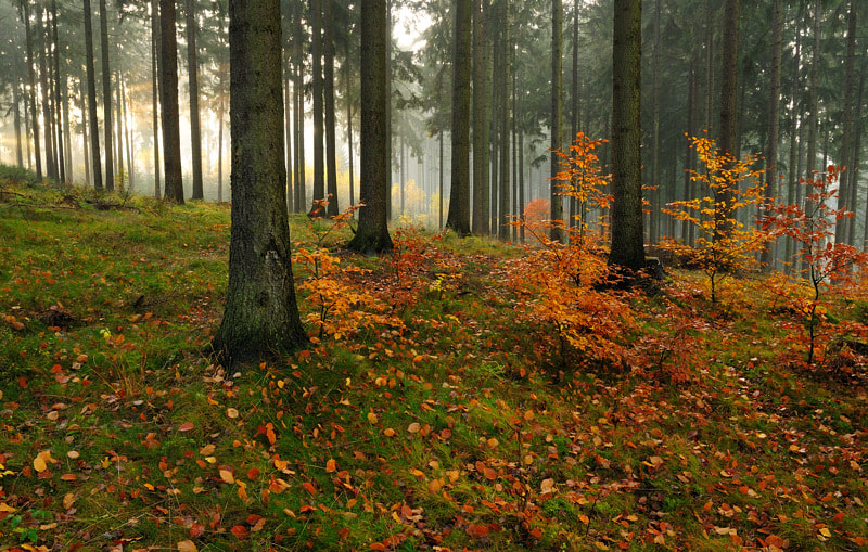 Photograph bright leaves by Simon Höllebauer on 500px