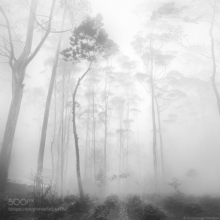 Photograph Silence by Hengki Koentjoro on 500px