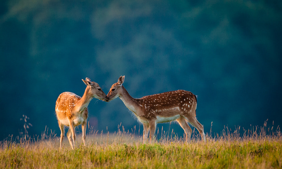 Photograph Kiss! by Hans Kruse on 500px