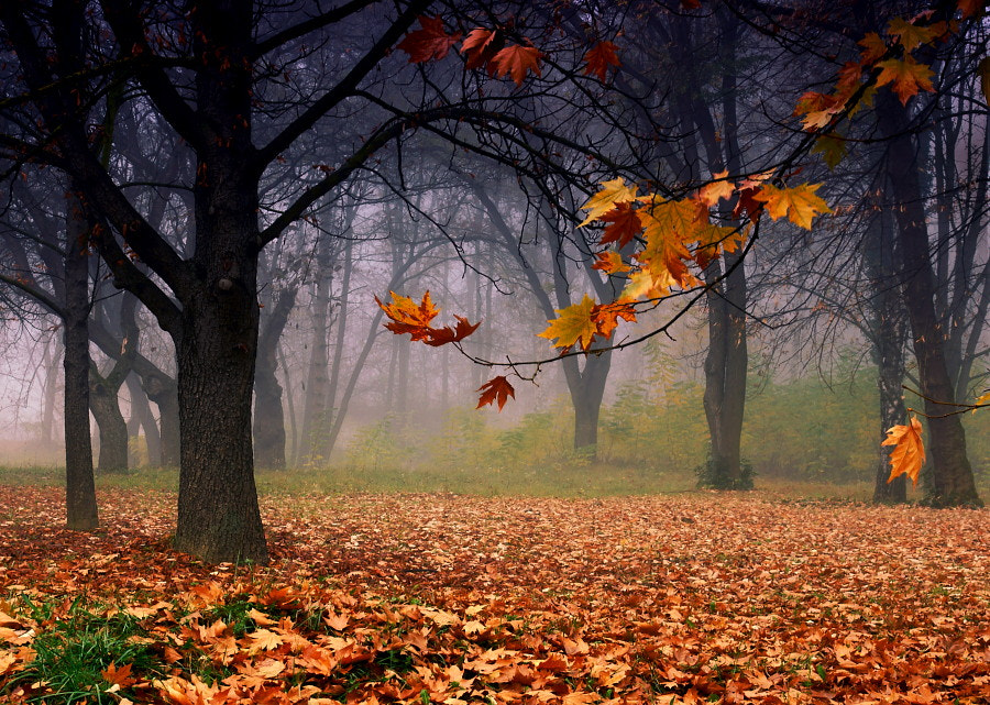 Photograph Autumn by  ANTONI on 500px