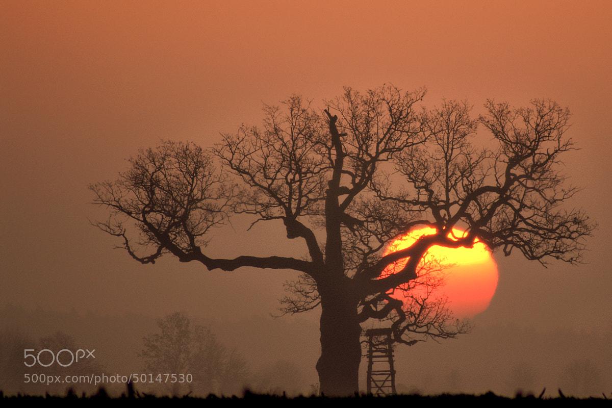 Photograph Sunrise in Rogalin by Marek Kulik on 500px