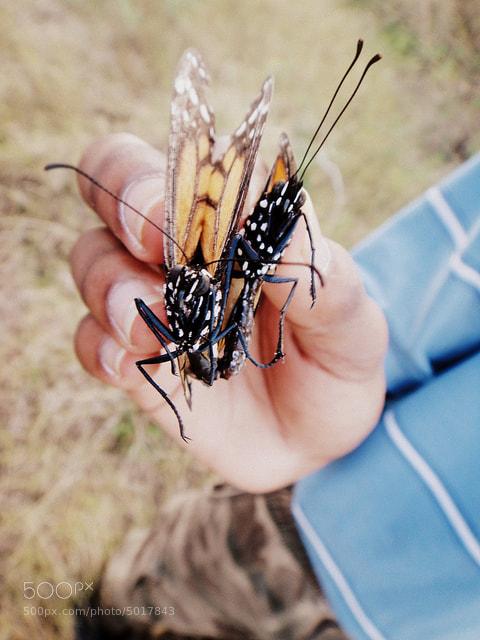 Photograph Butterflies by Annetta Jackson on 500px
