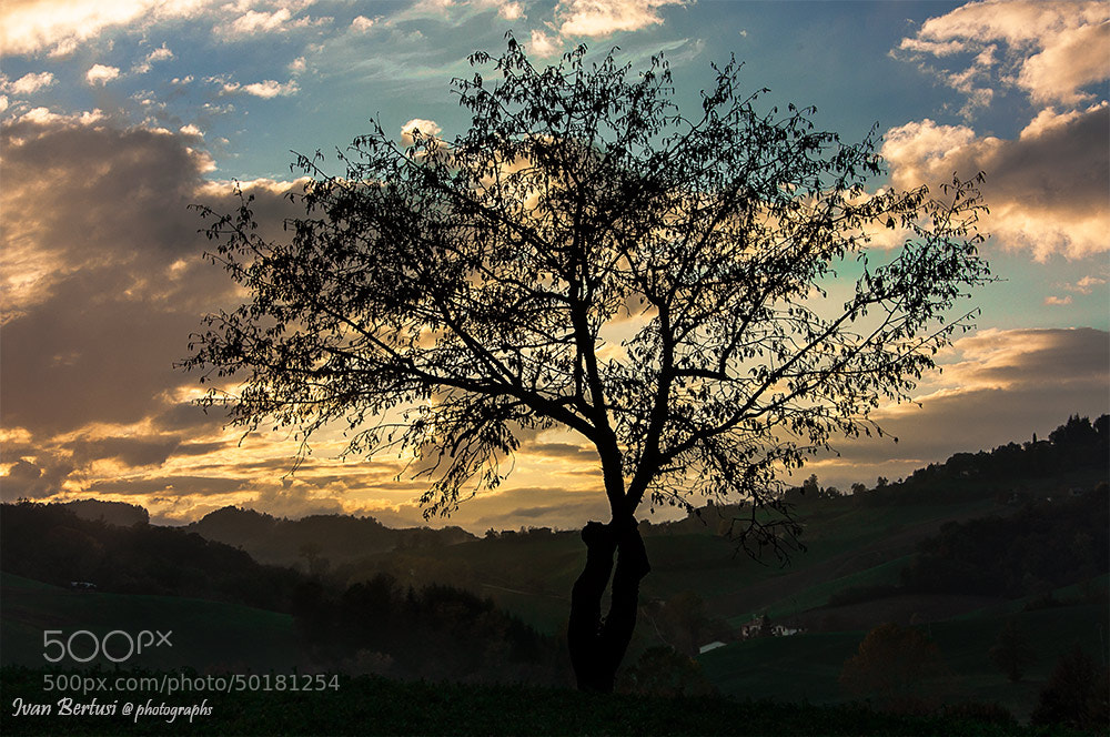 Photograph The last leaves by Ivan Bertusi on 500px