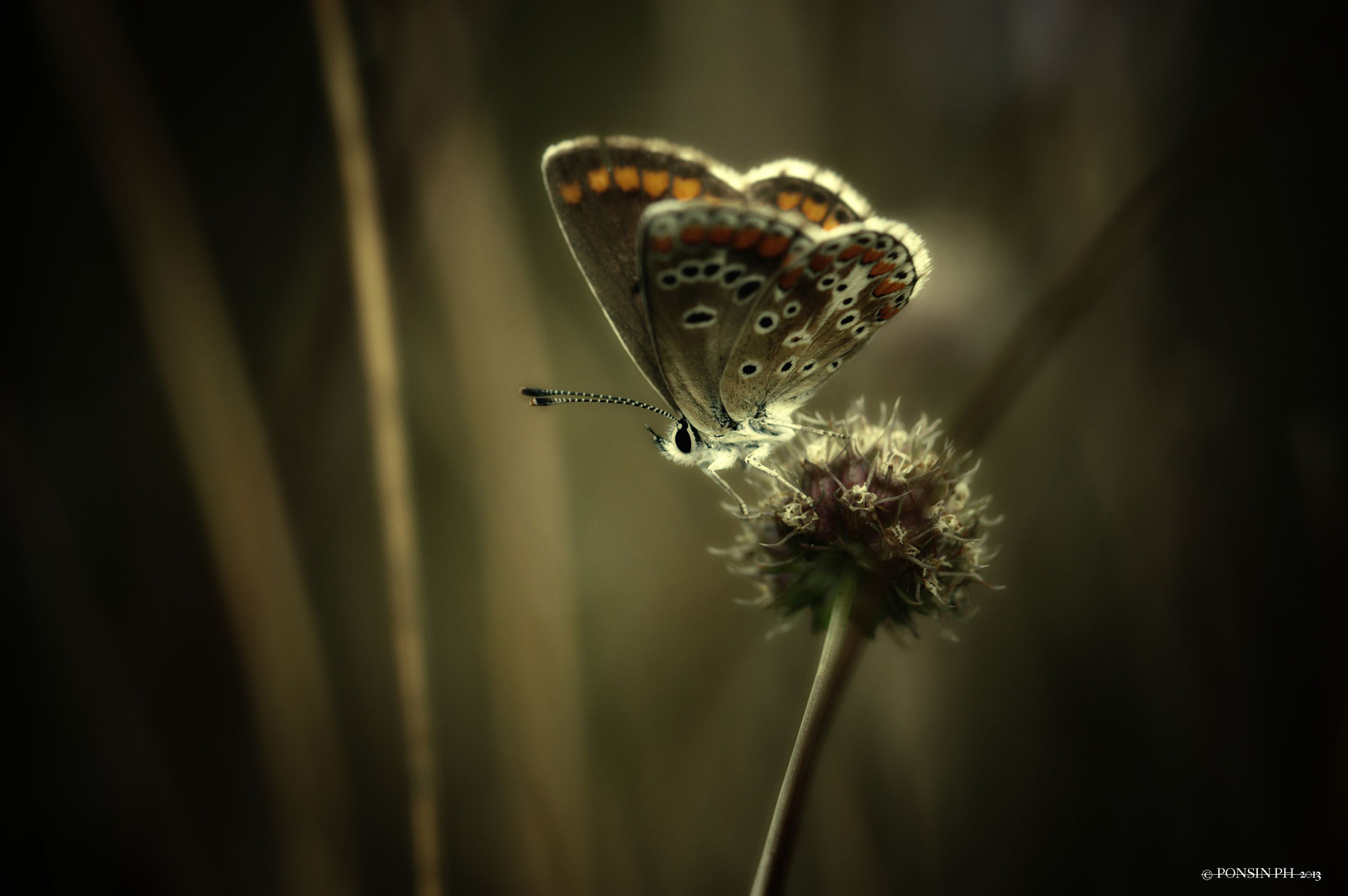 Photograph Butterfly by Philippe PONSIN on 500px