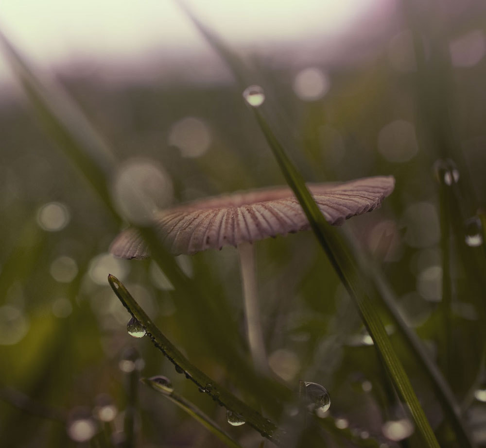Photograph Raindrops keeps falling on my head...II by Photographix_by_Moni on 500px