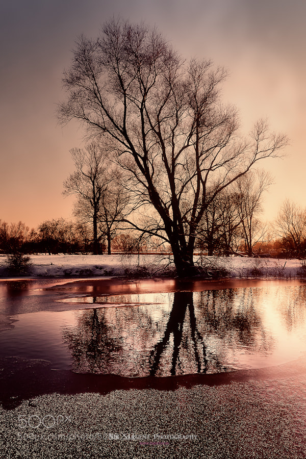 Winter scene in Fenland (Ely)