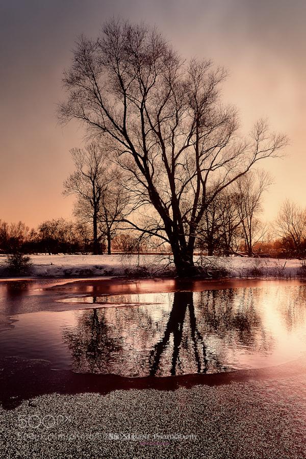 Winter scene in Fenland (Ely)