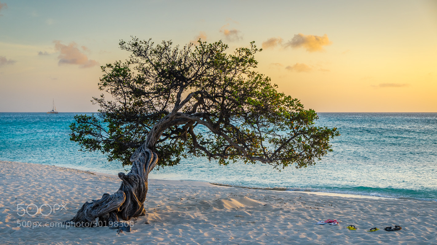 Photograph Divi Tree at Sunset by Chilehead Craig on 500px