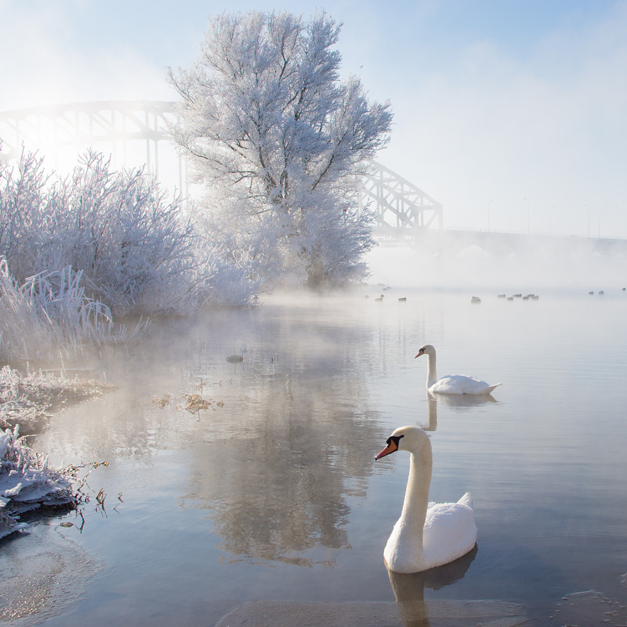 Icy Swan Lake by Edwin van Nuil on 500px.com