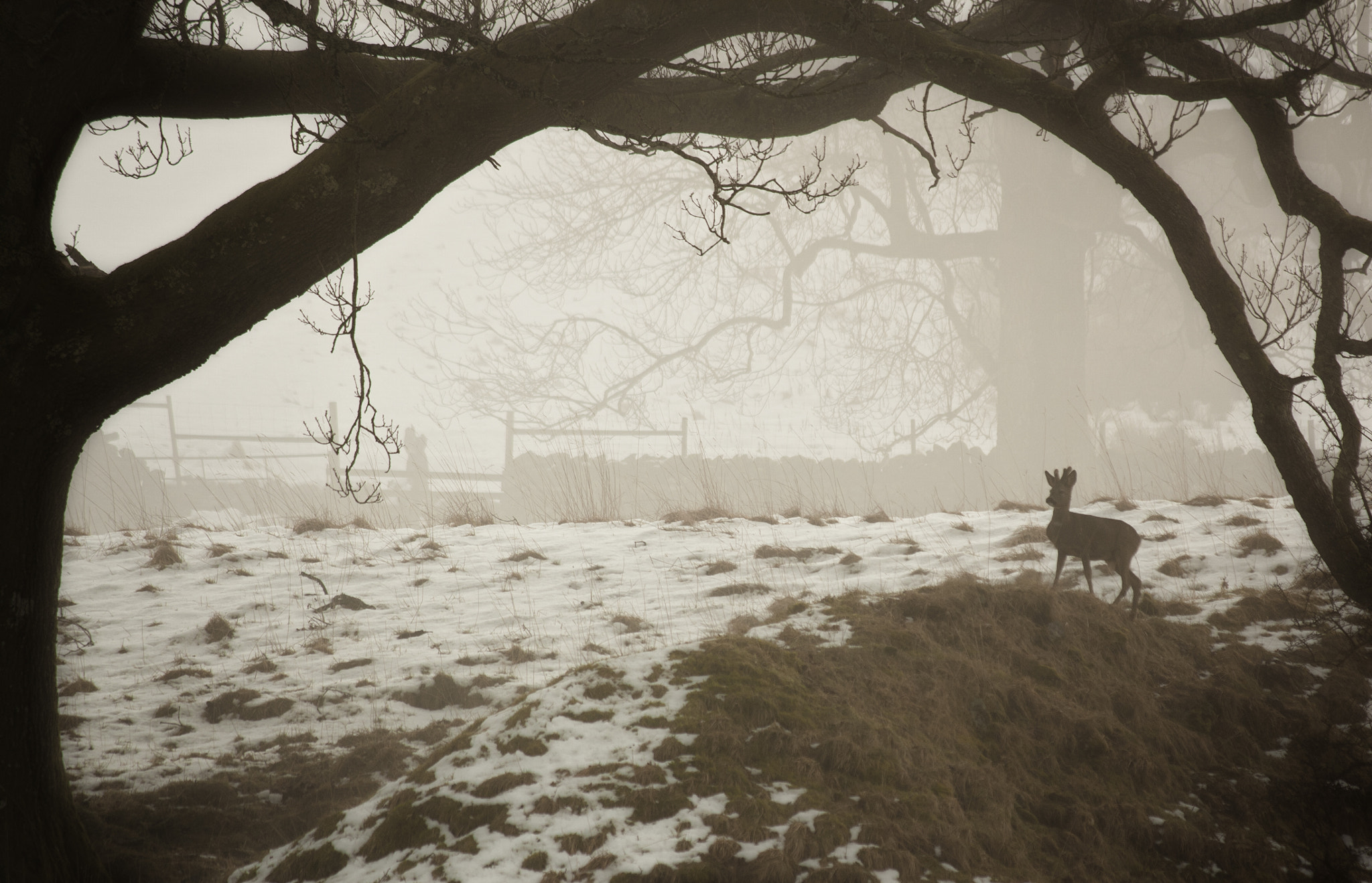 Photograph Solo deer by Donny Walsh on 500px