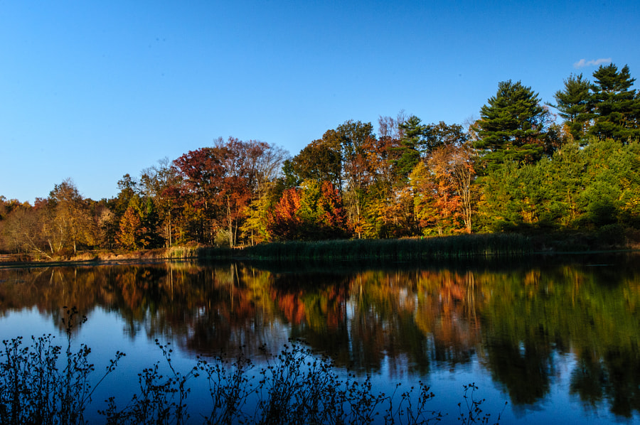 A beautiful afternoon at the pond, nature with all its spectacular coloration.