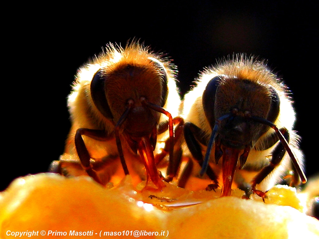 Photograph VIDEO My Bees: http://www.youtube.com/watch?v=VV_E21YPHsQ by primo masotti on 500px