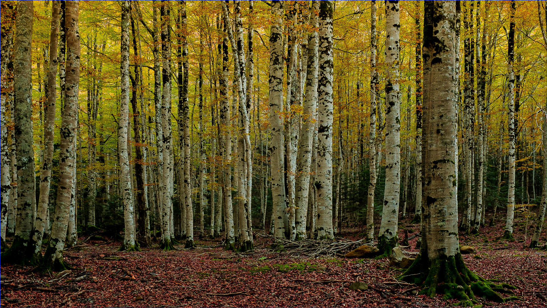 Photograph Otoño IV (Huesca) by Ferran Cartagena  on 500px