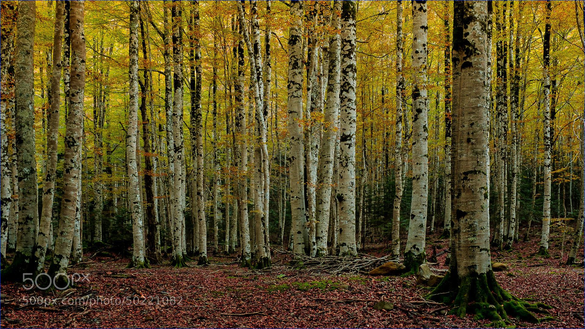 Photograph Otoño IV (Huesca) by Ferran Cartagena  on 500px