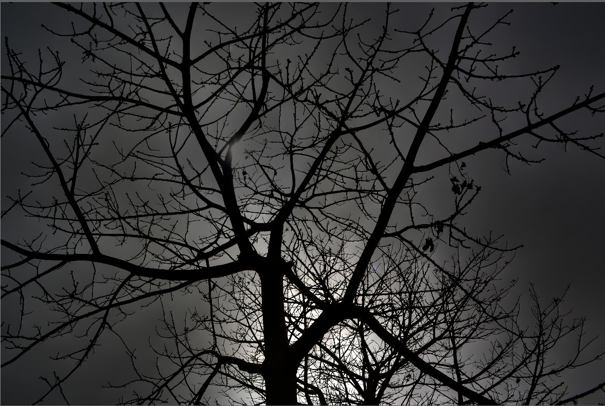 Photograph Spider Branches  by jamil ghanayem on 500px