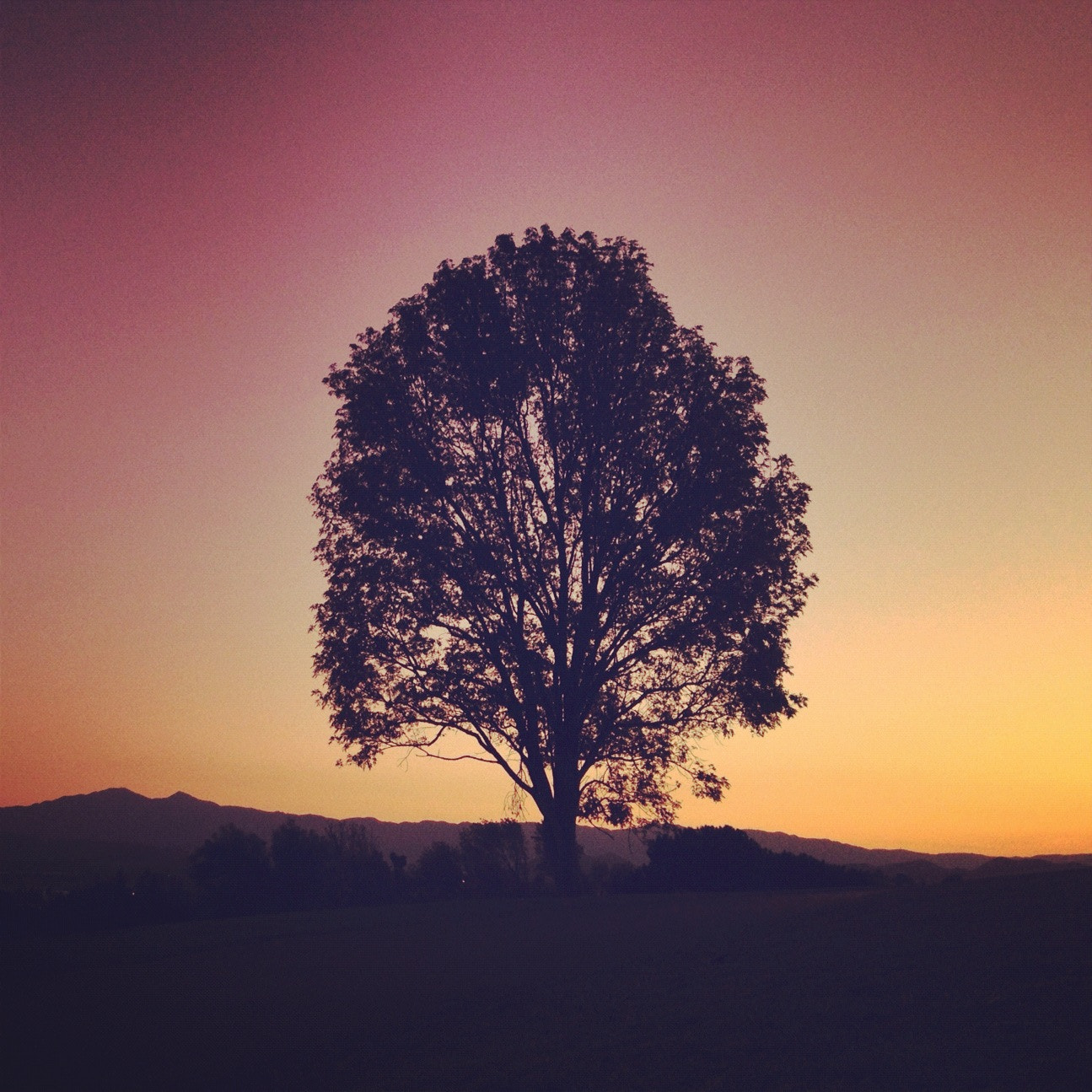 Photograph Tree of Life by Dirk Dallas on 500px