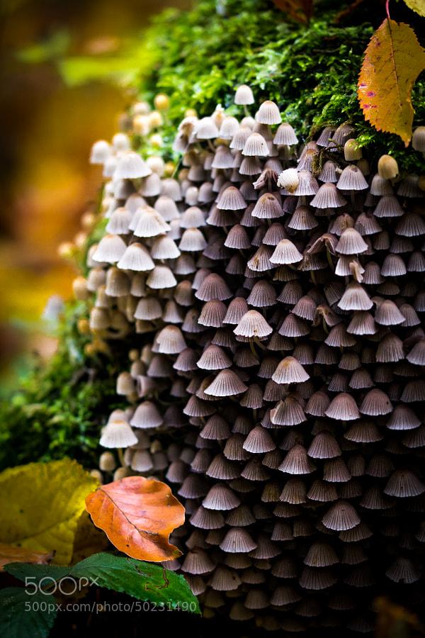 21 Magical Mushroom Toadstool And Fungi Images Digital