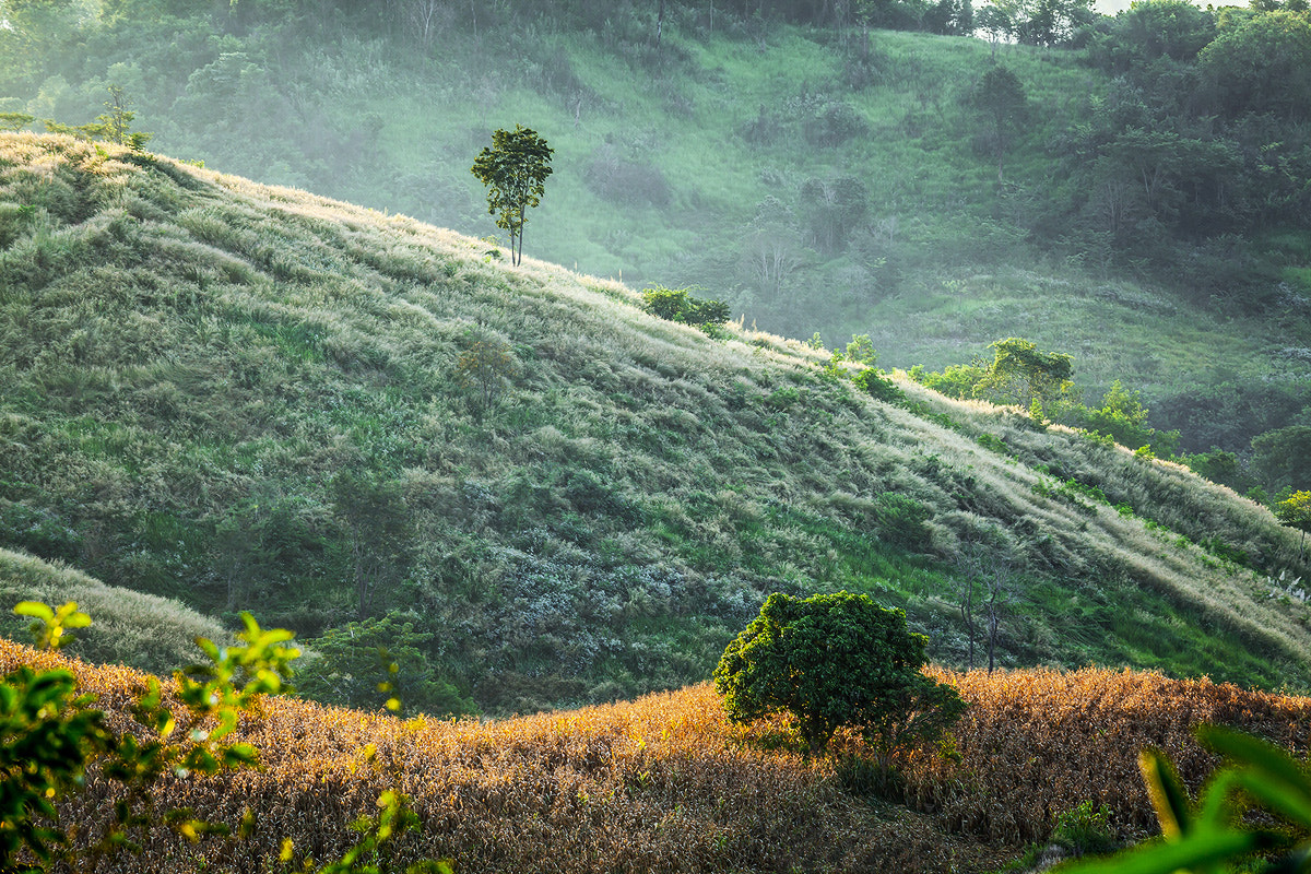 Photograph Trees & Hills by Sasipa Muennuch on 500px
